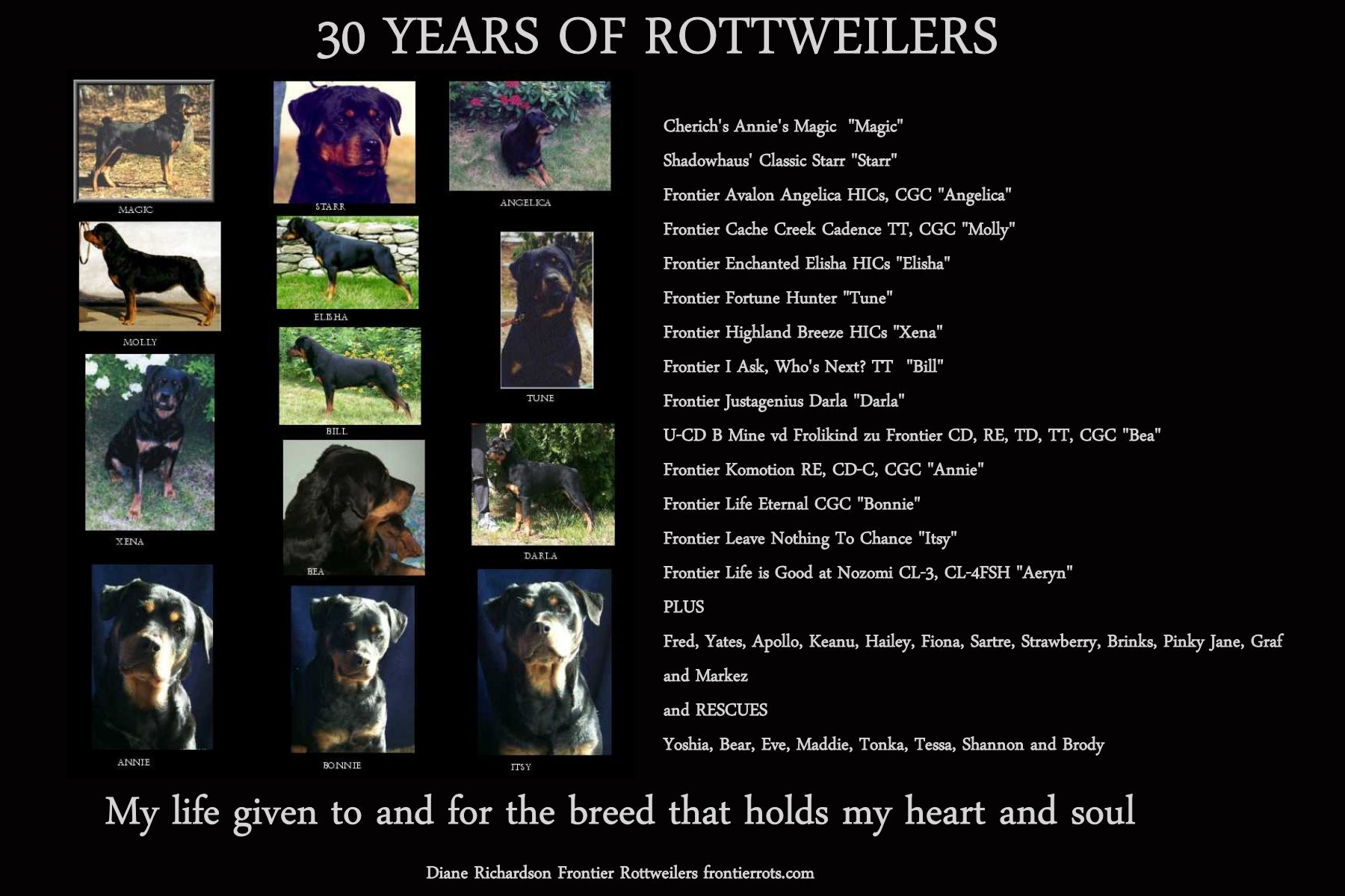 30 years rottweilers